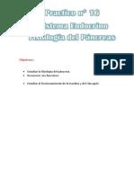 Diabetes y Sistema Endocrino