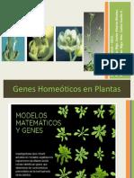 Genes Homeoticos en Plantas