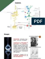2. FISIOLOGIA DELLA MEMBRANA II (1).pdf