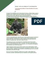 gorilas de montaña.docx