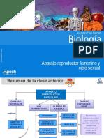 Clase 13 Aparato Reproductor Femenino y Ciclo Sexual 2016