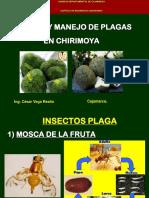 Sanidad y Manejo de Plagas en Chirimoya - Cvr - 160711