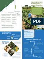 Plegable Mejores Prácticas Para La Sostenibilidad de La Palma de Aceite