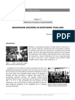 Oyster Mushroom Cultivation in Northern Thailand