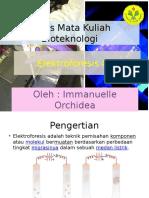 elektroforesisgel-140125221201-phpapp01