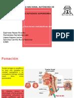 Fonación, Olfación y Metabolismo de Pulmón