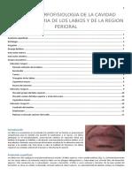 CLASE II MORFOFISIOLOGIA BUCAL.pdf