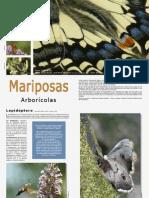 Mariposas Arborícolas