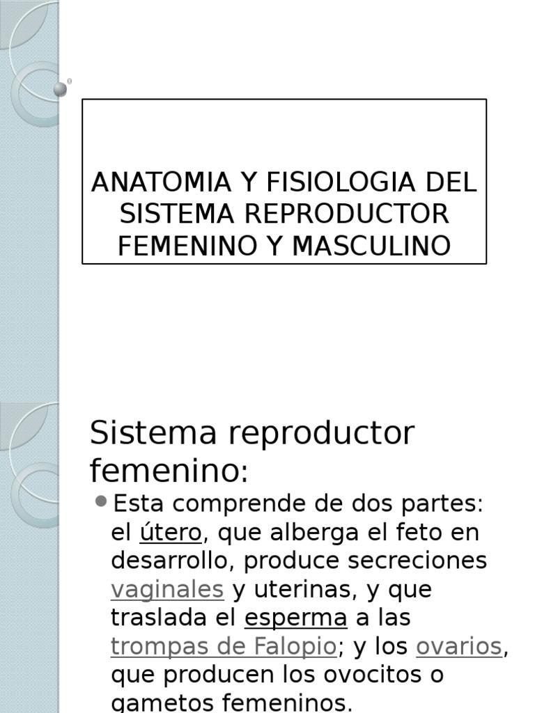 Anatomia y Fisiologia Del Sistema Reproductor Femenino y