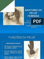 Anatomia Da Pelve Feminina