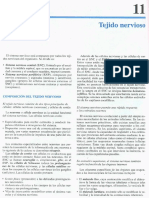 Cap 11-Tejido nervioso.pdf