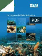 Pubbl.le Tegnue Alto Adriatico-1