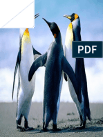 Penguins.pdf