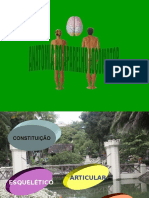 Anatomia Do Aparelho Locomotor