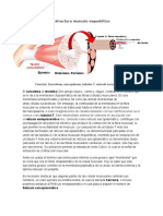 Estructura musculo esquelético