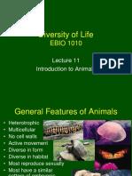 Lecture 11 - Animals Intro