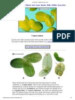 Lemnaceae - Images of Lemna Minor