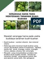 Hama Tanaman Buah-buahan