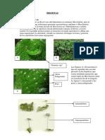 (2) Lab Briofitas