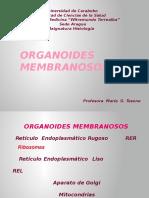 ORGANOIDES MEMBRANOSOS
