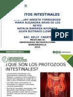 parasitos intestinales