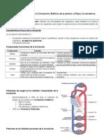 Resumen de Sistema Circulatorio