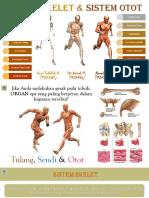 Sistem Skelet & Sistem Otot