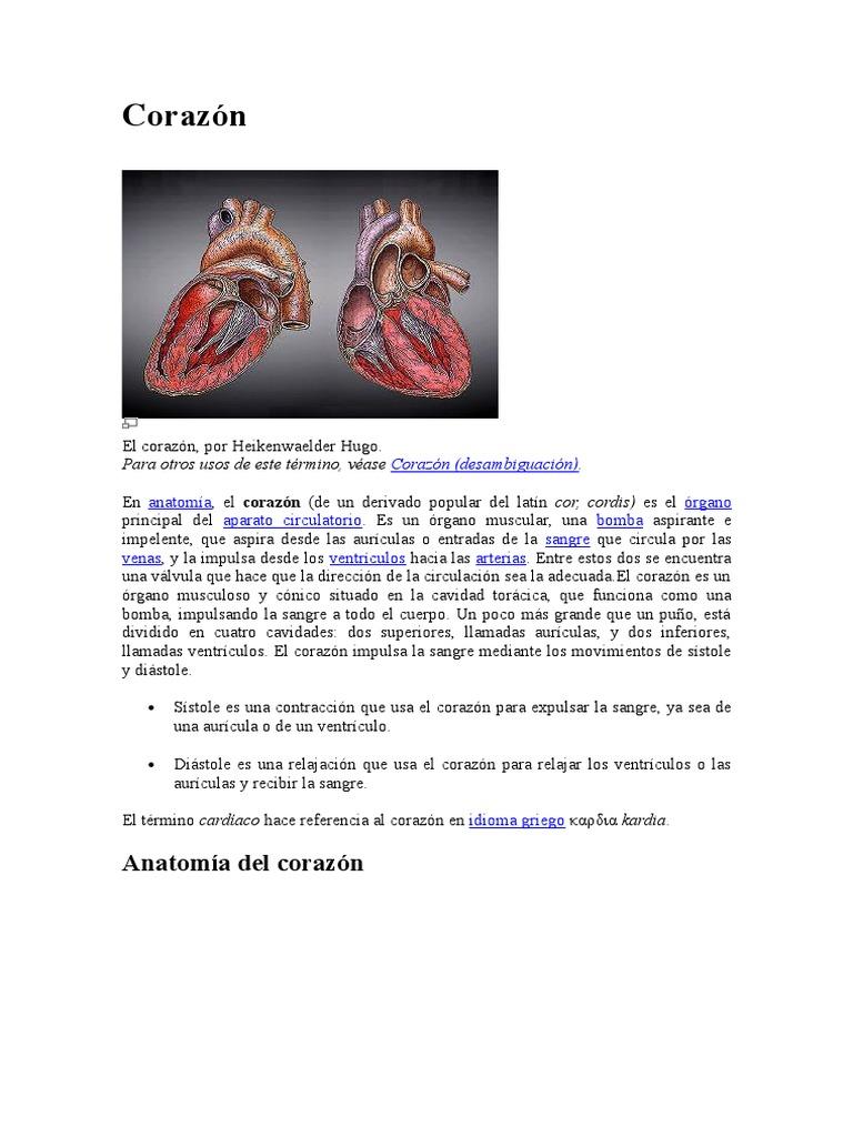 Concepto Del Corazón
