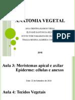 Relatório Anatomia Vegetal