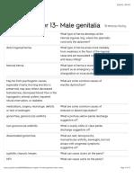 Bates Chapter 13- Male genitalia Flashcards | Quizlet