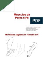 Slides - ANATOMIA - Músculos Da Perna e Pé