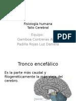 Anatomía, Fisiología y Patología del tallo cerebral