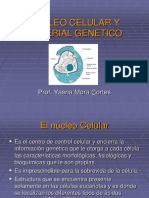 Nucleo Celular y Material Genetico