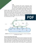 Transpor Protein Menuju RE