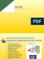 Ciclo Celular Tm 10-06-16