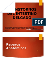 Trastornos Del Intestino Delgado Exposicion