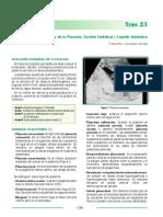 ecografía placenta cordon y liquido.pdf