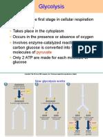Aerobic Respiration Process.ppt