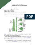 IV Unidad Nutricion Vegetal Transporte de Nutrimentos y Fotoasimilados