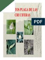 Insectos de Cruciferas