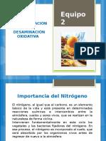 Transaminación y Desaminacion Oxidativa