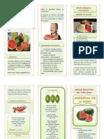 triptico LA SANDÍA.pdf