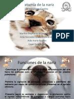 127907568-Anatomia-de-la-nariz.pdf