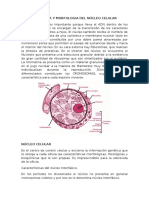 FISIOLOGIA Y MORFOLOGIA DEL NÚCLEO CELULAR.docx