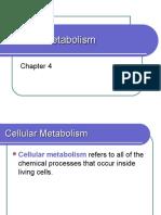 4. Cellular Metabolism