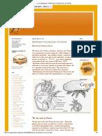 Corona Beekeepers_ Reproductive Biology of Mites