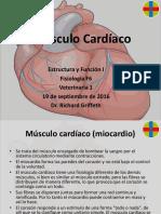 EF1 F6 Músculo Cardíaco RG