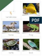 Vertebrate and Invertebrate Sorting Cards.pdf
