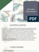 Zebrafish-Gastrulation