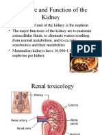 Kidney(Renal System)